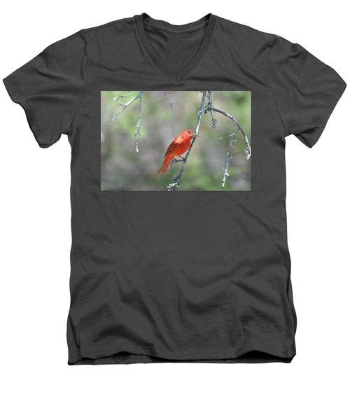 Summer Tanager Men's V-Neck T-Shirt