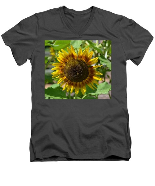 Sunflower Glory Men's V-Neck T-Shirt