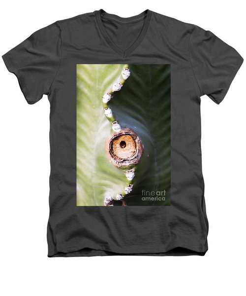 Men's V-Neck T-Shirt featuring the photograph Sunlight Split On Cactus Knot by John Wadleigh