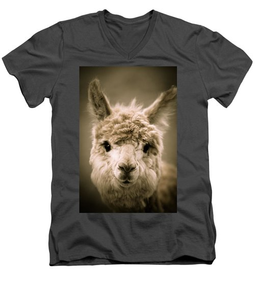Sweet Alpaca Men's V-Neck T-Shirt by Shane Holsclaw