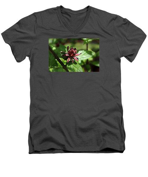 Sweet Shrub Men's V-Neck T-Shirt