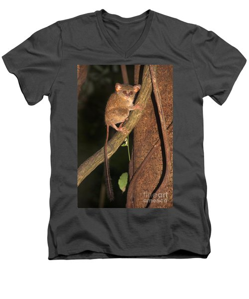 Men's V-Neck T-Shirt featuring the photograph Tarsius Tarsier  by Sergey Lukashin