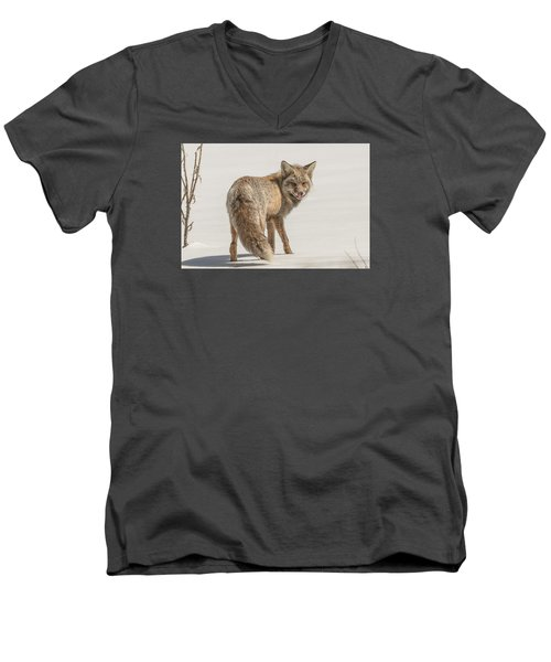 The Hungry Fox Men's V-Neck T-Shirt by Yeates Photography