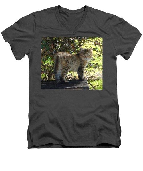 Timber The Kitten Men's V-Neck T-Shirt