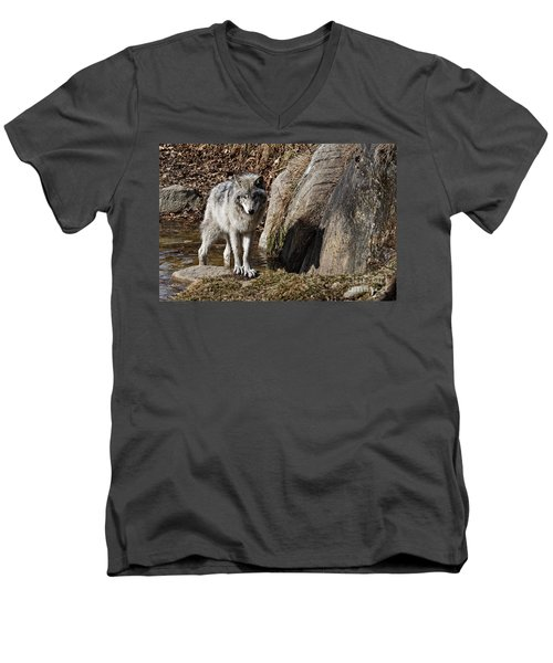 Men's V-Neck T-Shirt featuring the photograph Timber Wolf In Pond by Wolves Only