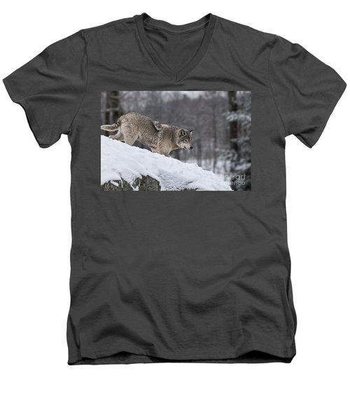 Timber Wolf On Hill Men's V-Neck T-Shirt