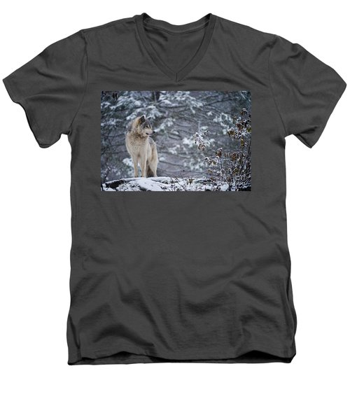 Timber Wolf Pictures 189 Men's V-Neck T-Shirt