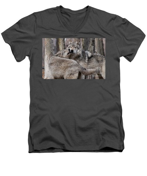 Men's V-Neck T-Shirt featuring the photograph Timber Wolves Playing by Wolves Only