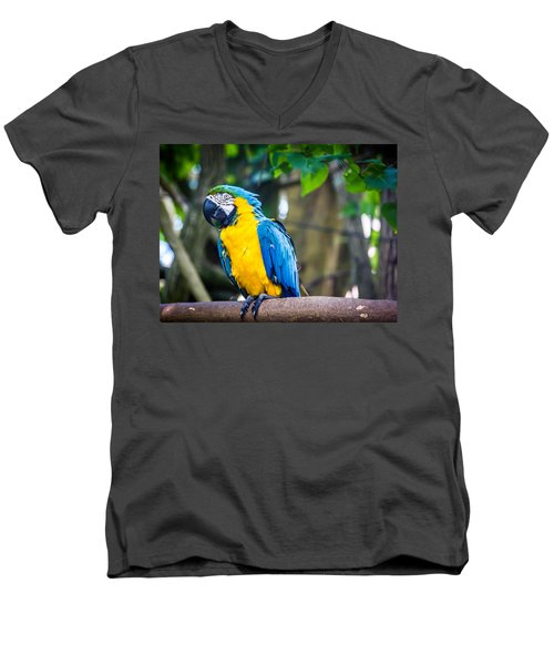 Tropical Parrot Men's V-Neck T-Shirt by Sara Frank