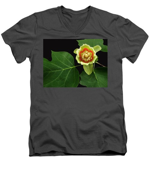 Tulip Bloom Men's V-Neck T-Shirt by Don Spenner
