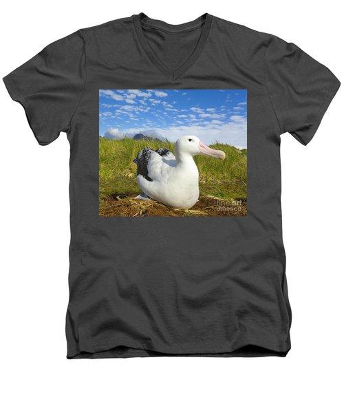 Wandering Albatross Incubating  Men's V-Neck T-Shirt