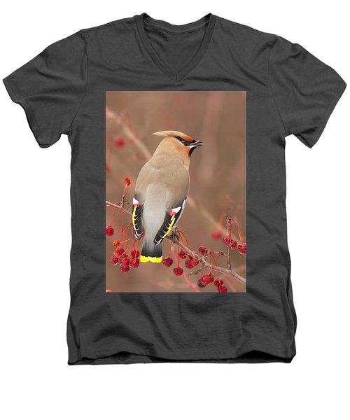 Waxwing In Winter Men's V-Neck T-Shirt by Mircea Costina Photography