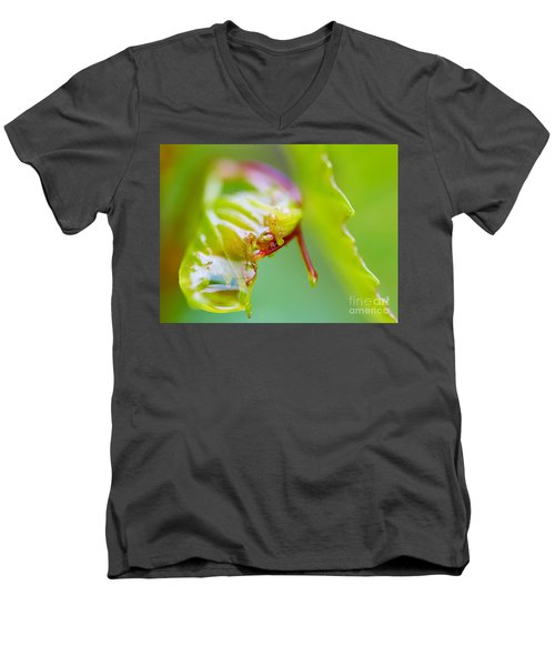 Wet Grape Leaf  Men's V-Neck T-Shirt