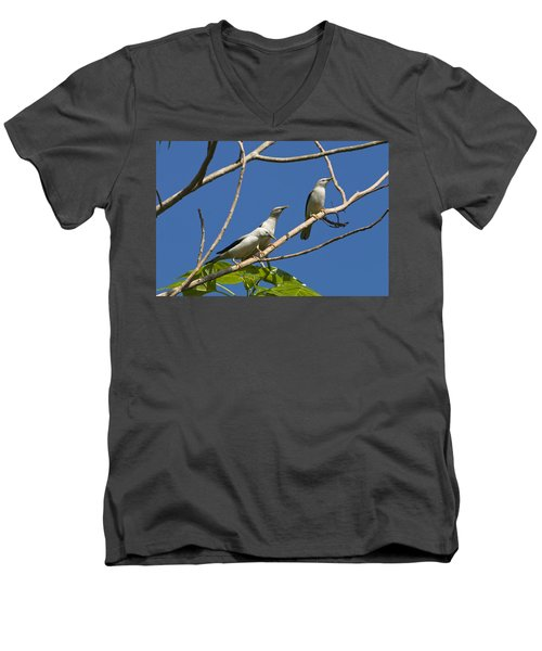 White-headed Starlings Havelock Isl Men's V-Neck T-Shirt by Konrad Wothe