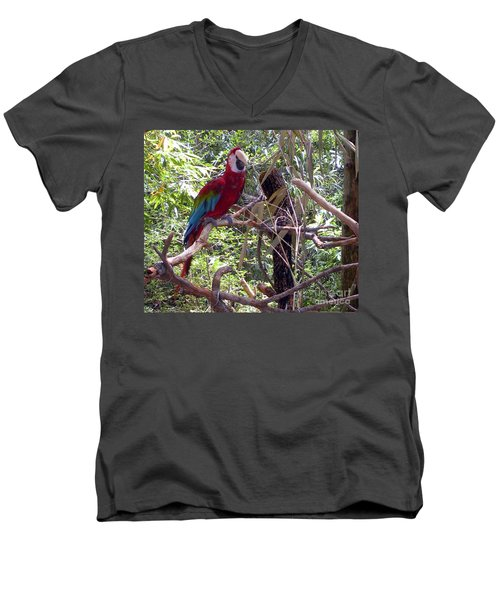 Men's V-Neck T-Shirt featuring the photograph Wild Hawaiian Parrot  by Joseph Baril