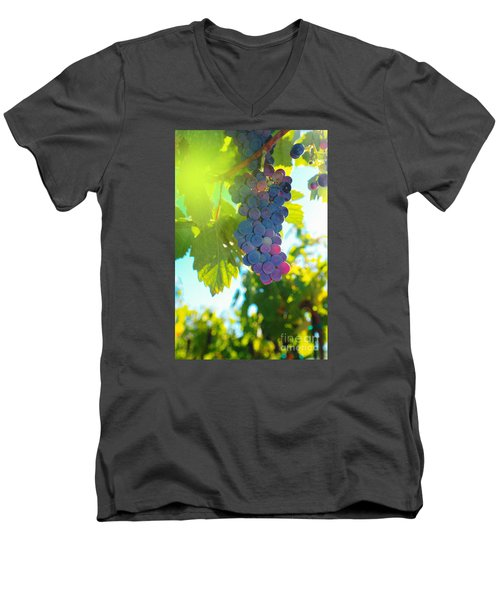 Wine Grapes  Men's V-Neck T-Shirt by Jeff Swan