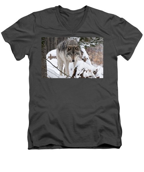 Men's V-Neck T-Shirt featuring the photograph Winter Timber Wolf by Wolves Only