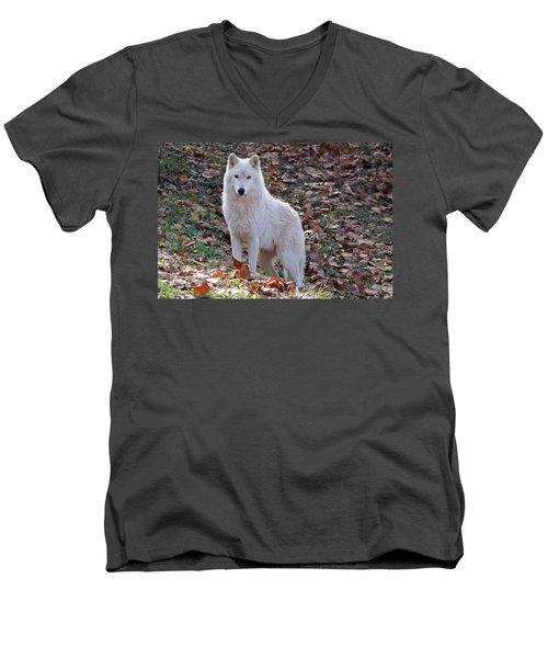 Wolf In Autumn Men's V-Neck T-Shirt