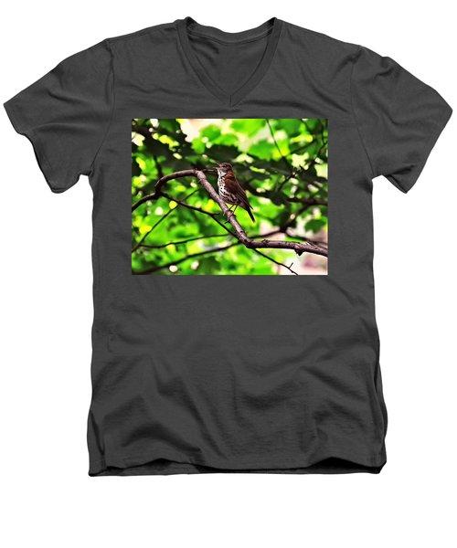 Wood Thrush Singing Men's V-Neck T-Shirt by Chris Flees