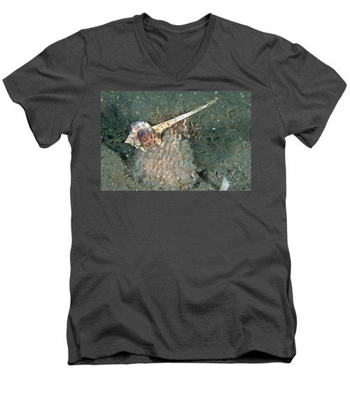 Woodcock Murex Depositing Eggs Men's V-Neck T-Shirt