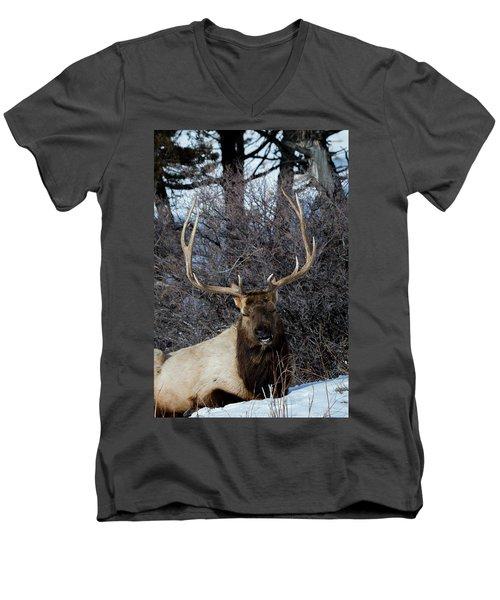 Wyoming Elk Men's V-Neck T-Shirt