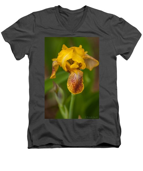 Yellow Bearded Iris Men's V-Neck T-Shirt