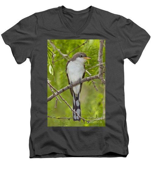 Yellow-billed Cuckoo Men's V-Neck T-Shirt