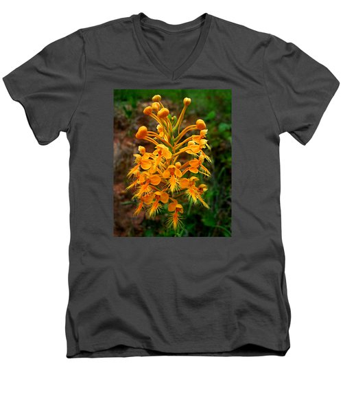 Wild Yellow Fringed Orchid Men's V-Neck T-Shirt