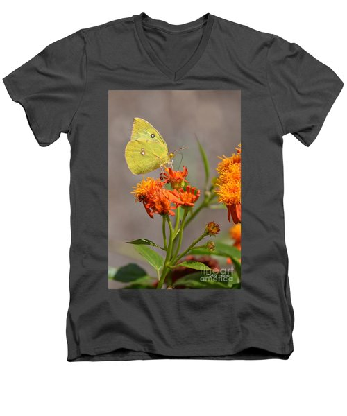 Yellow Sulphur Butterfly Men's V-Neck T-Shirt by Debra Martz