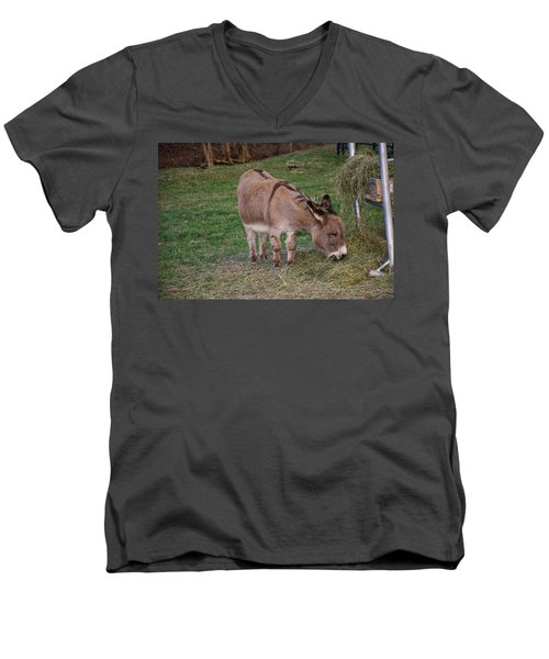 Young Donkey Eating Men's V-Neck T-Shirt
