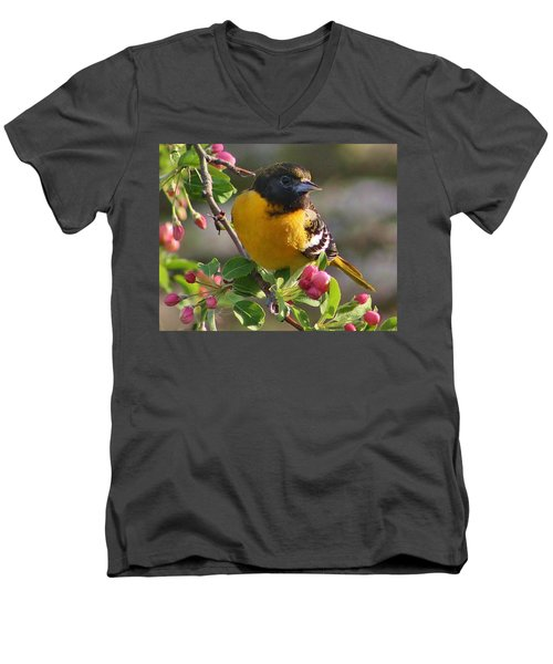 Young Male Oriole Men's V-Neck T-Shirt by Bruce Bley