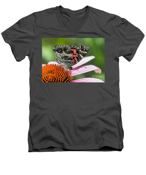 Butterfly Feeding Men's V-Neck T-Shirt