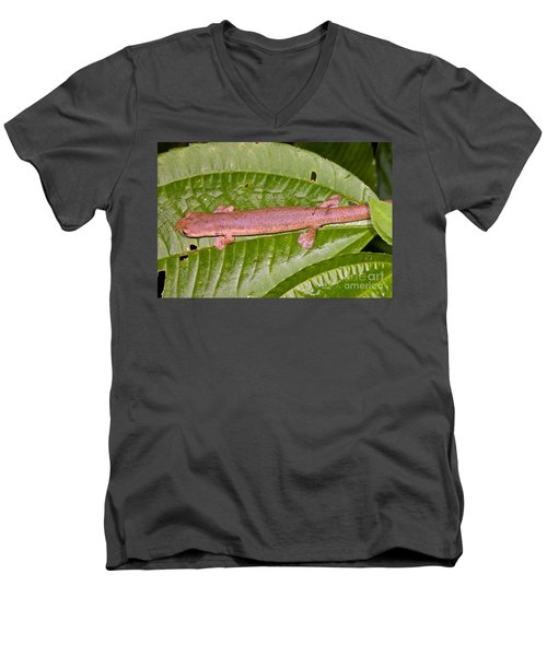 Bolitoglossine Salamander Men's V-Neck T-Shirt by Dante Fenolio