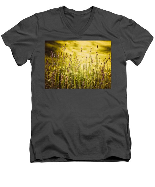 Men's V-Neck T-Shirt featuring the photograph Lavender Gold by Sara Frank