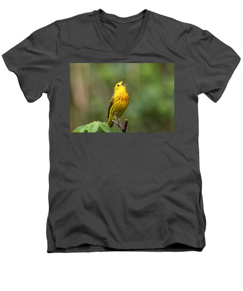 Yellow Warbler Men's V-Neck T-Shirt