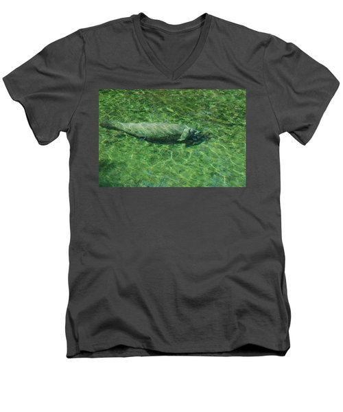 Manatee Men's V-Neck T-Shirt