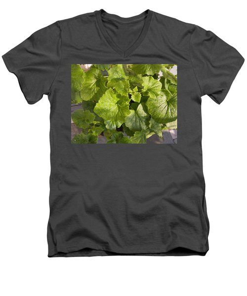 A Green Leafy Vegetable Plant After Watering In Bright Sunrise Men's V-Neck T-Shirt by Ashish Agarwal