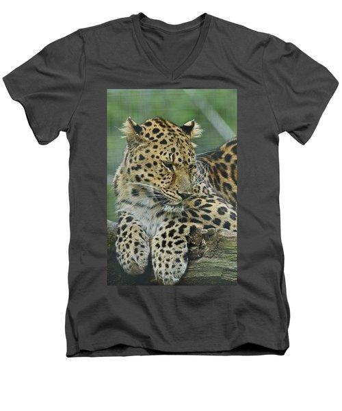 Amur Leopard Men's V-Neck T-Shirt