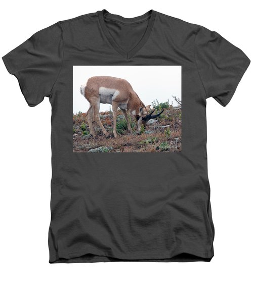 Antelope Grazing Men's V-Neck T-Shirt