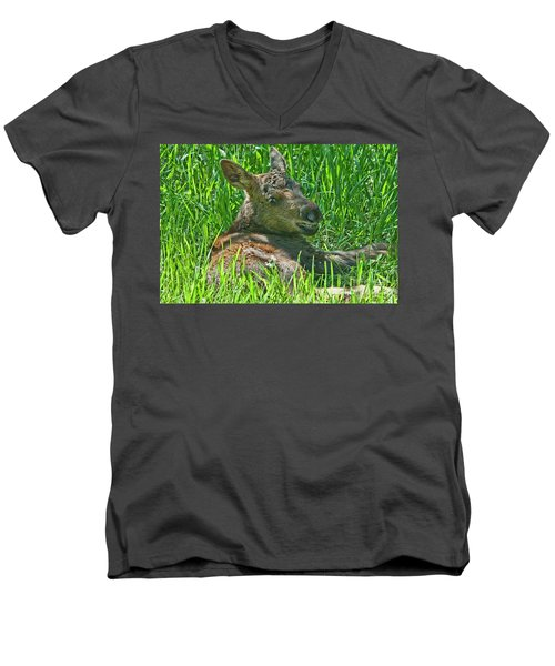 Baby Moose Men's V-Neck T-Shirt