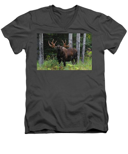 Men's V-Neck T-Shirt featuring the photograph Bull Moose Flehmen by Doug Lloyd