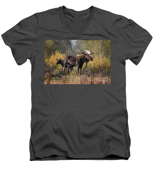 Bull Tolerates Calf Men's V-Neck T-Shirt