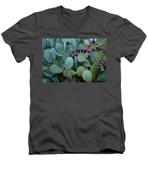 Men's V-Neck T-Shirt featuring the photograph Cactus Plants by Maria Urso