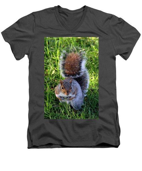City Squirrel Men's V-Neck T-Shirt