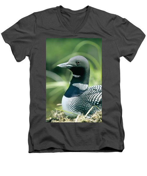 Common Loon, La Mauricie National Park Men's V-Neck T-Shirt by Philippe Henry