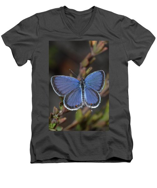 Eastern Tailed Blue Butterfly Men's V-Neck T-Shirt