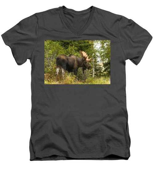 Fall Bull Moose Men's V-Neck T-Shirt