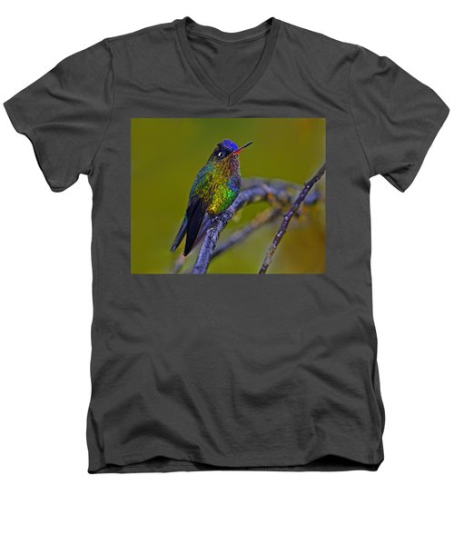Fiery-throated Hummingbird Men's V-Neck T-Shirt