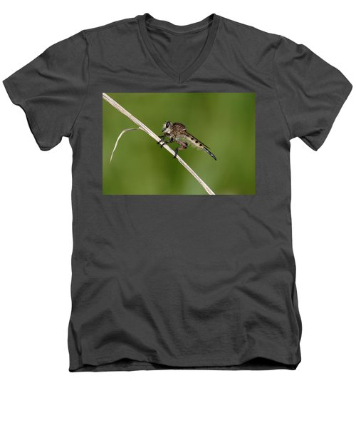 Giant Robber Fly - Promachus Hinei Men's V-Neck T-Shirt