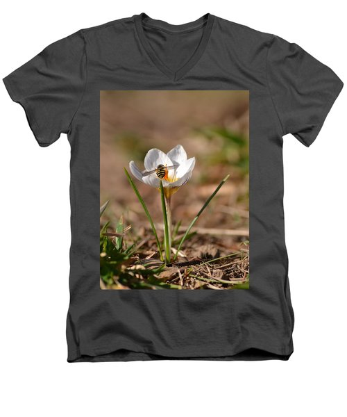Hoverfly Visitng A Crocus Men's V-Neck T-Shirt